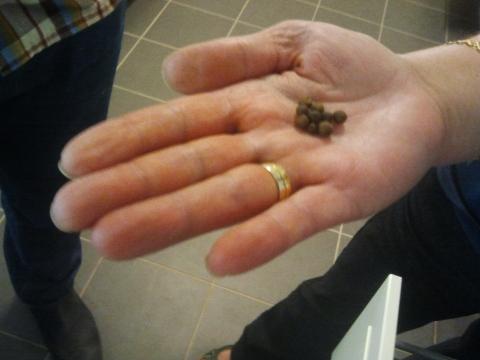 Krudpeppar in leila's hand